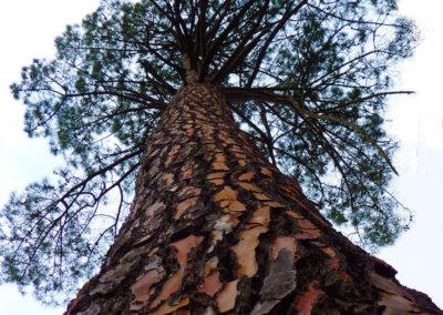 Les arbres, premiers habitants du lieu