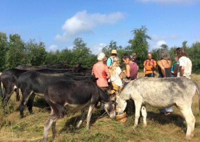 Balande nature avec les ânes dans les prés à Manaska Montbrun-Bocage
