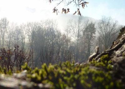 Splendide paysage hivernal aux pieds des pyrénées