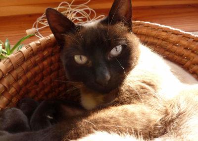 Un des 7 chats à Manaska