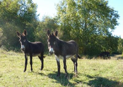 Deux ânes curieux