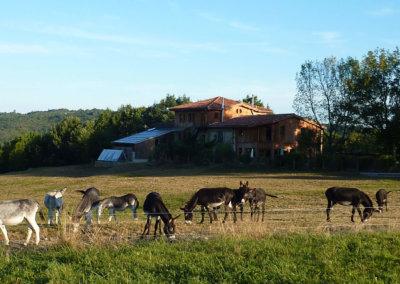 Les ânes devant la maison