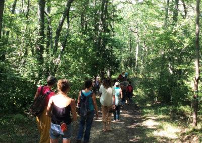 Marche reconnexion avec la nature dans les bois à Manaska