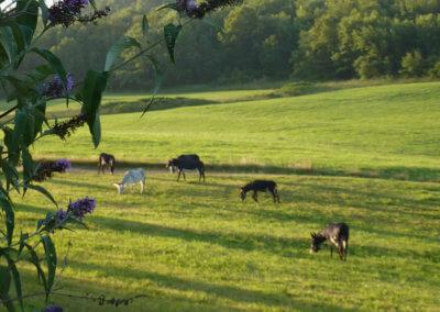 Manaska est un lieu de bien-être pour se ressourcer au milieu de la nature et des animaux en Haute-Garonne